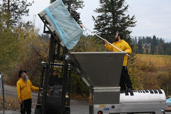 photo - Rabbi Levy Teitlebaum and Rabbi Shmuly Hecht manage the grape-crushing process