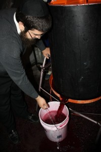 photo - Pressing of the wine post fermentation.