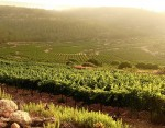 Israel – a land of many blessings, including wine
