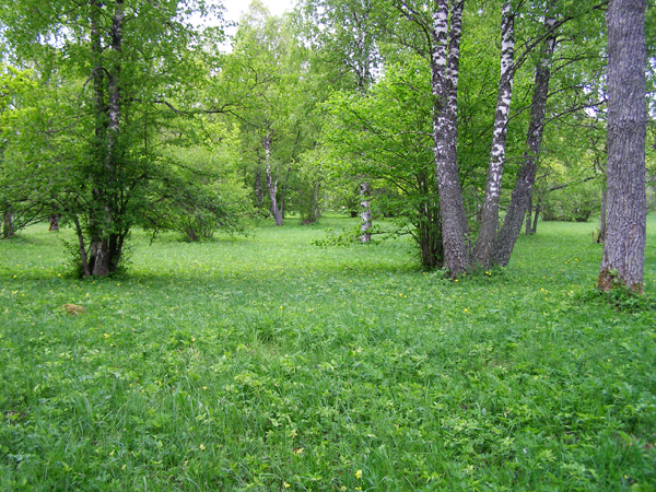 Greens in the meadow – a Sholem Aleichem story