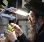 photo - The examination of an etrog is still serious business in modern times