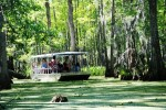 photo - Honey Island Swamp tours take passengers through a landscape untouched by time