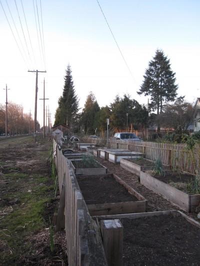 photo -JFSA's community garden provides fresh produce to the Jewish Food Bank.