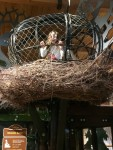 photo - At the Hands On Children's Museu, children learn many things, including just how large a bald eagle's nest isr)