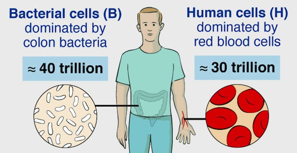 Germs, humans, numbers