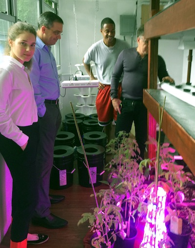 photo - Leigh Ofer checks out the Seed Street hydroponic farm in Harlem