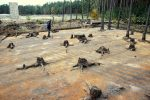 New discoveries at Sobibor