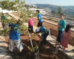 photo - Planting trees as a community project in Jerusalem