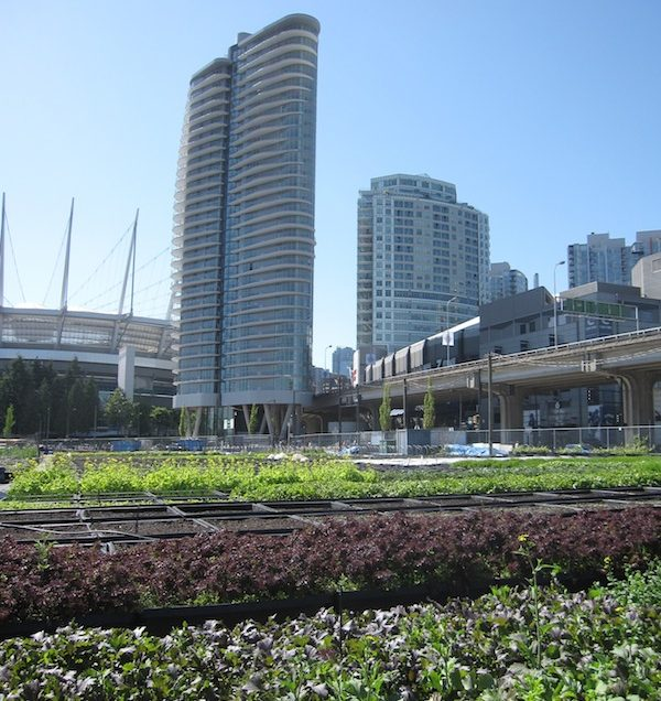 Urban farming in Vancouver