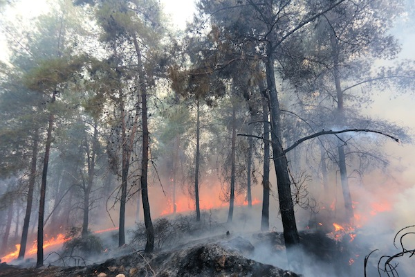 photo - November 2016. A serious fire breaks out near Latrun in the Jerusalem corridor following yet another dry, hot summer. Some 140 firefighters are needed to bring the blaze under control.