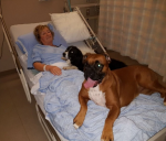 photo - Annette Poitras, a dog walker who disappeared in nature, was found safe and sound with the dogs after three days