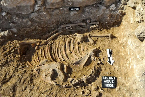 Ancient donkey leads to new discoveries