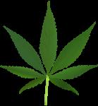 סוף סוף: מריחואנה היא חוקית