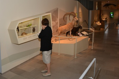photo - It is not just the quantity of exhibits and specimens at the museum that makes it special, it is also the presentation of the material