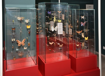 photo - the museum has a definitive collection of live insects, which are featured in 17 terrariums, as well as almost three million insect samples