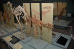photo - The displays at the Steinhardt Museum of Natural History educate visitors on natural history, as well as current-day environmental issues