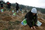 photo - In Israel, Tu b'Shevat is a day for planting saplings