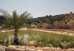 photo - Ayalon Canada Park in the Ayalon Valley is one of the projects JNF supports