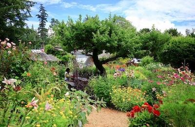 photo - Hollyhock Garden