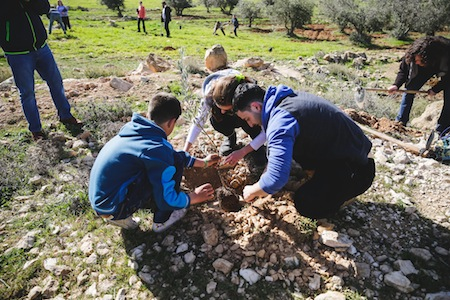photo - T'ruah students planting trees