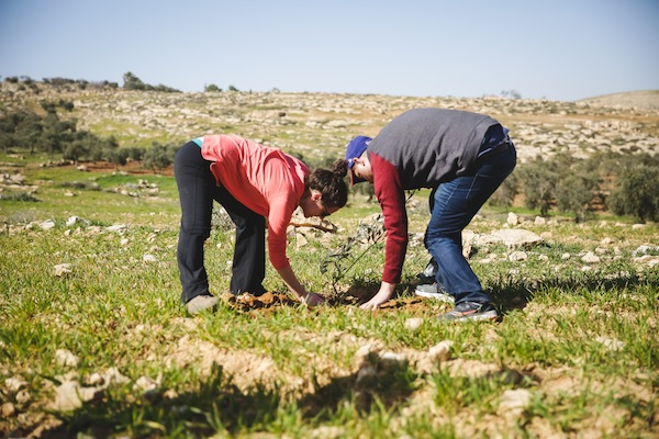 photo - T'ruah students help plant trees in the Hebron Hills