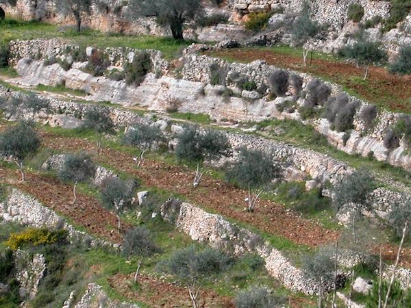 photo - Terraces at Sataf in the Jerusalem Corridor