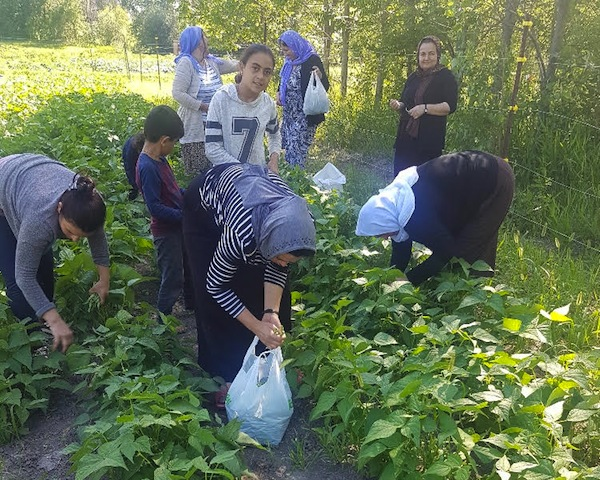 photo - Operation Ezra in Winnipeg has expanded to include farming and selling local produce