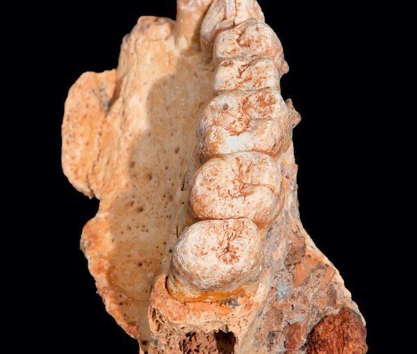 photo - A human jawbone found in the Misliya Cave on Mount Carmel near Haifa