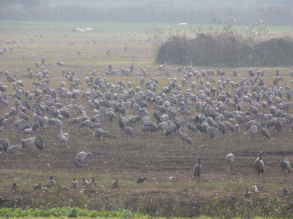 photo - Israel's Hula Valley is a major stopping place for migrating birds