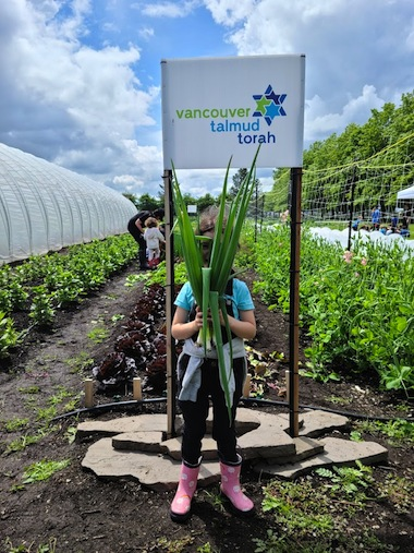 photo - Vancouver Talmud Torah Grade 1 students have a plot on Syd Belzberg's farm, where they grew scallions and other vegetables