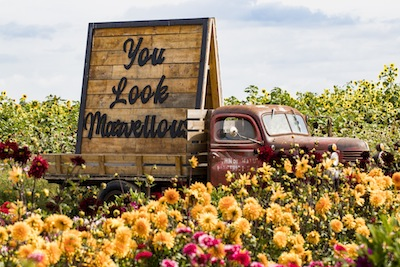 photo - Micah Groberman took this photograph last year at the Richmond Sunflower Festival